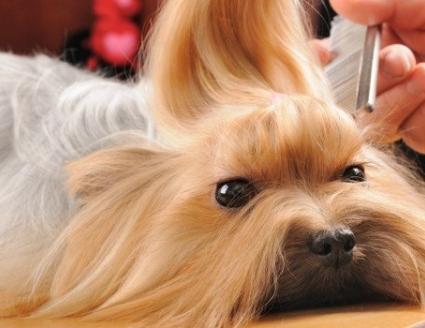 226681pet-shop-cachorro-650x350.jpg